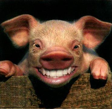 pig_smiling.jpg