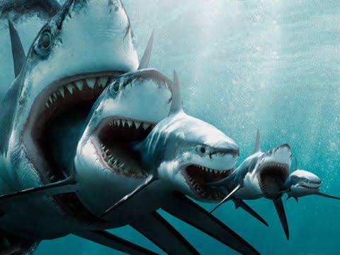 shark-eat-shark.jpg