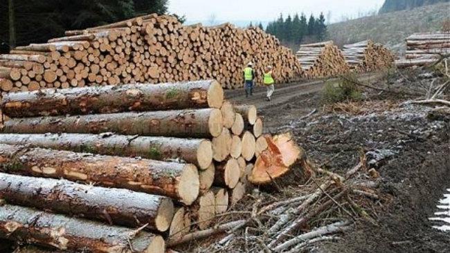 lemne.jpg