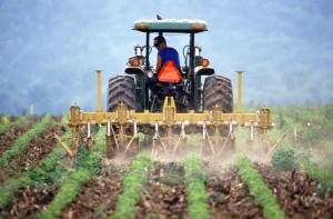 agricultura (4)