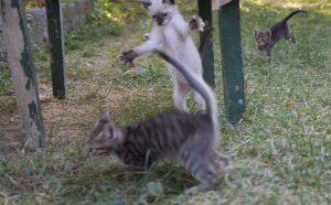 pisici pentru site