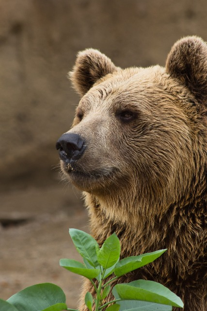 bear-3610966_1920.jpg
