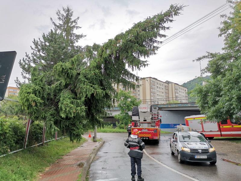 arbore-cazut-obor-piatra-neamt-2019-3.jpg
