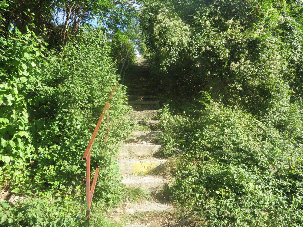 scari-sufocate-de-vegetatie-1000x750.jpg